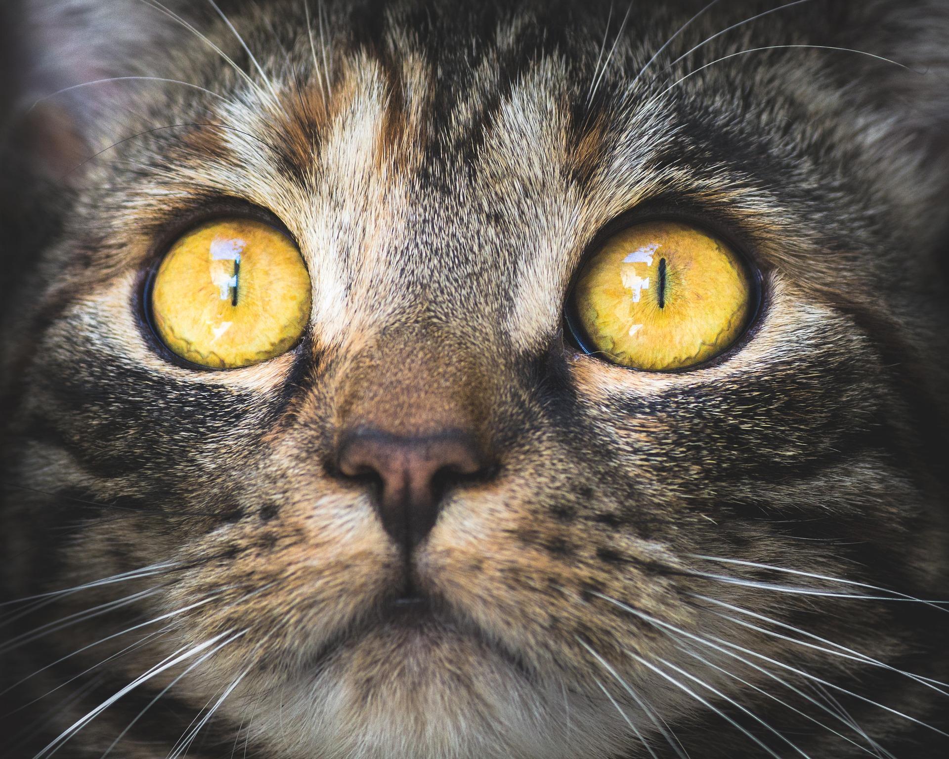 cat-3374422_1920